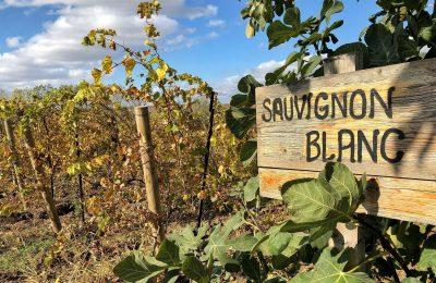 Best Sauvignon Blanc Wines